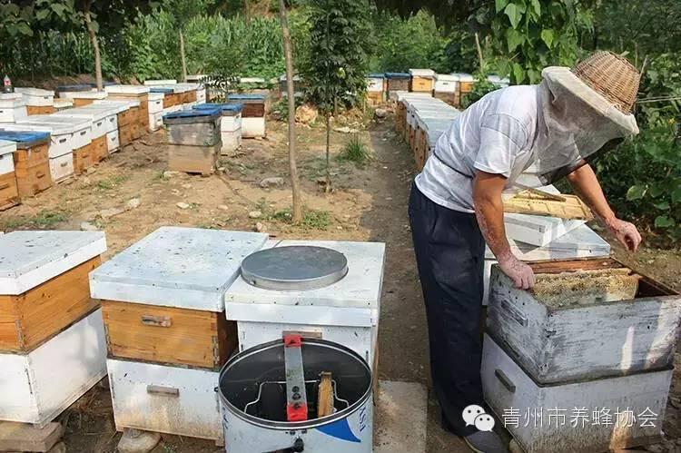 薰衣草蜂蜜功效 蜂蜜柠檬水图片 儿童能不能吃蜂蜜 胆汁反流性胃炎喝蜂蜜 蜂蜜怎么样吃最好