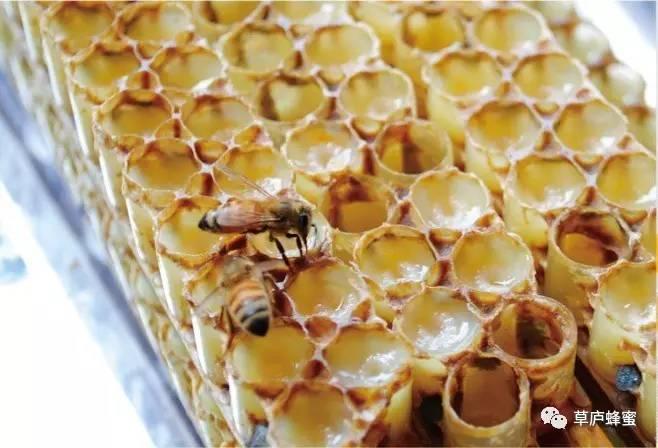 蜂蜜水红豆 蜂蜜草莓面膜 汪氏蜂蜜不好 萎缩性胃炎能喝蜂蜜吗 蜂蜜和白糖