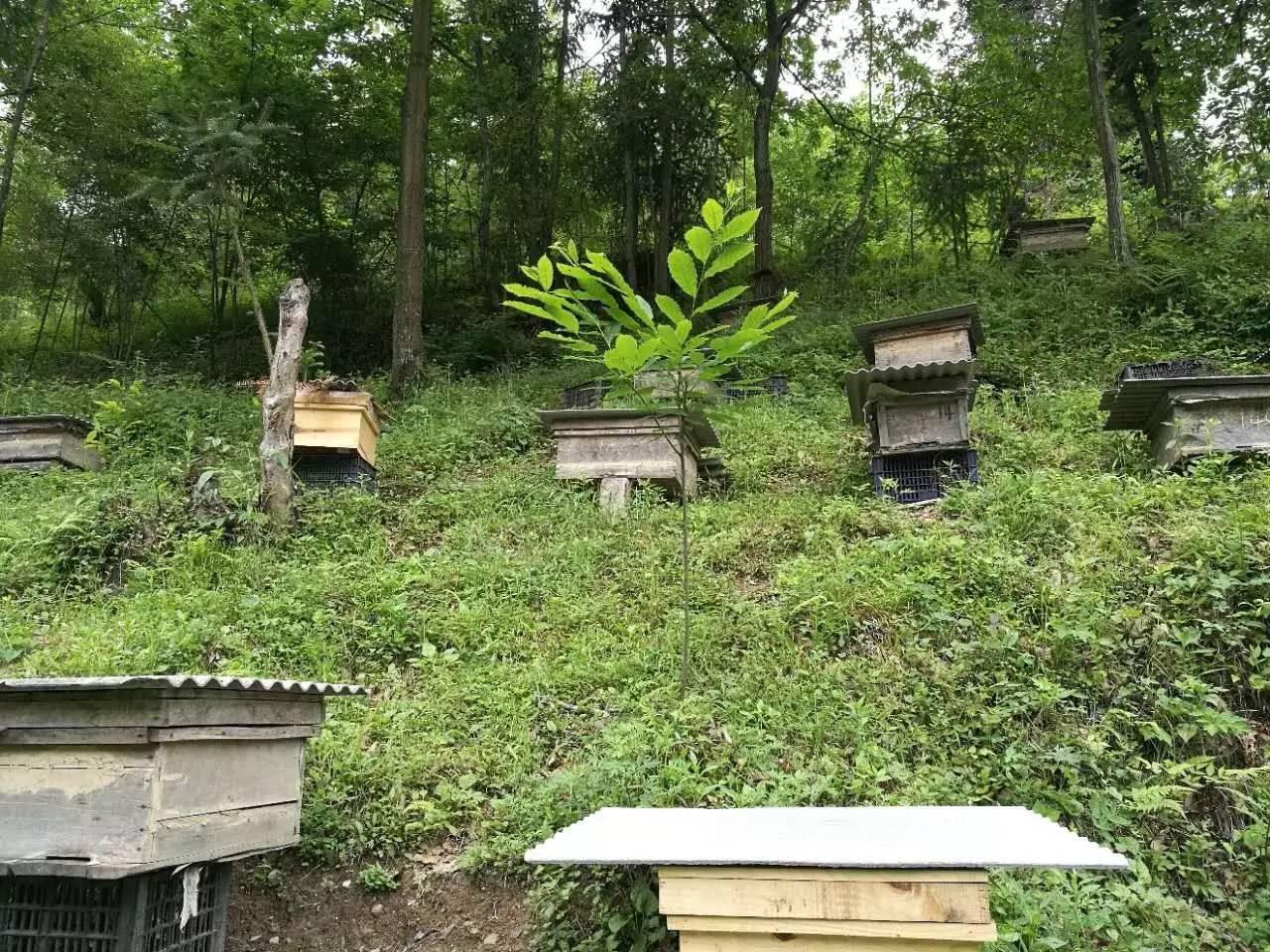 蜂蜜祛斑的小窍门 牛奶蜂蜜洗脸 蜂蜜可以加鸡蛋吗 蜂蜜好坏 同康健之源蜂蜜