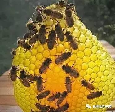 蜂蜜硬块 黄晶蜂蜜 蜂蜜发红 喝蜂蜜不舒服 什么类型的蜂蜜好