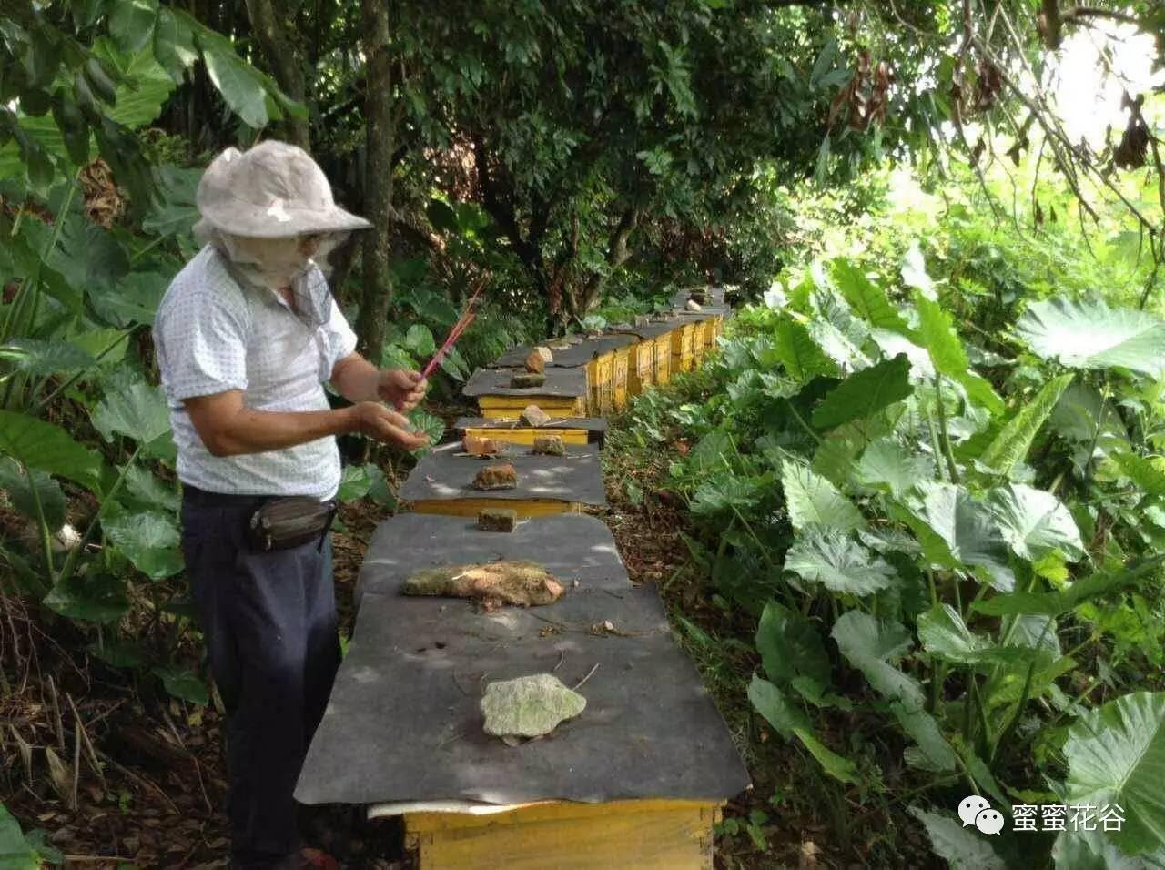 蜂蜜药典 蜂蜜开水冲有臭味 蜂蜜加热水 蜂蜜炮弹 用蜂蜜怎么制作面膜