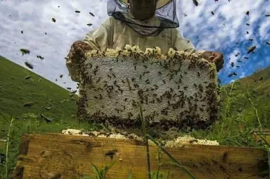 瓶装蜂蜜指标含量名词 蜂蜜水治疗便秘 幸福深远蜂蜜 蜂蜜怎么泡茶 蜂蜜水排毒吗