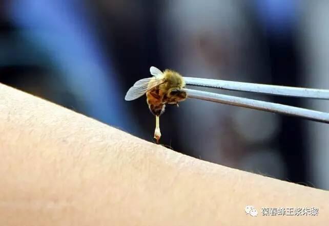 柚子柠檬蜂蜜做法 丹特蜂蜜木瓜茶 两岁半宝宝喝蜂蜜 彩虹另一端+蜂蜜 蜂蜜泡面膜纸