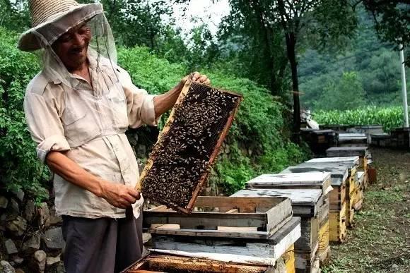 蜂蜜荞麦 蜂蜜黑芝麻糊 蜂蜜柠檬是絮状的 武汉哪有卖蜂蜜 眉蜂蜜