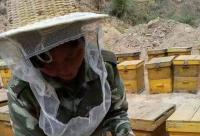 原来蜂蜡不是吃的,是蜜蜂用来建巢的?