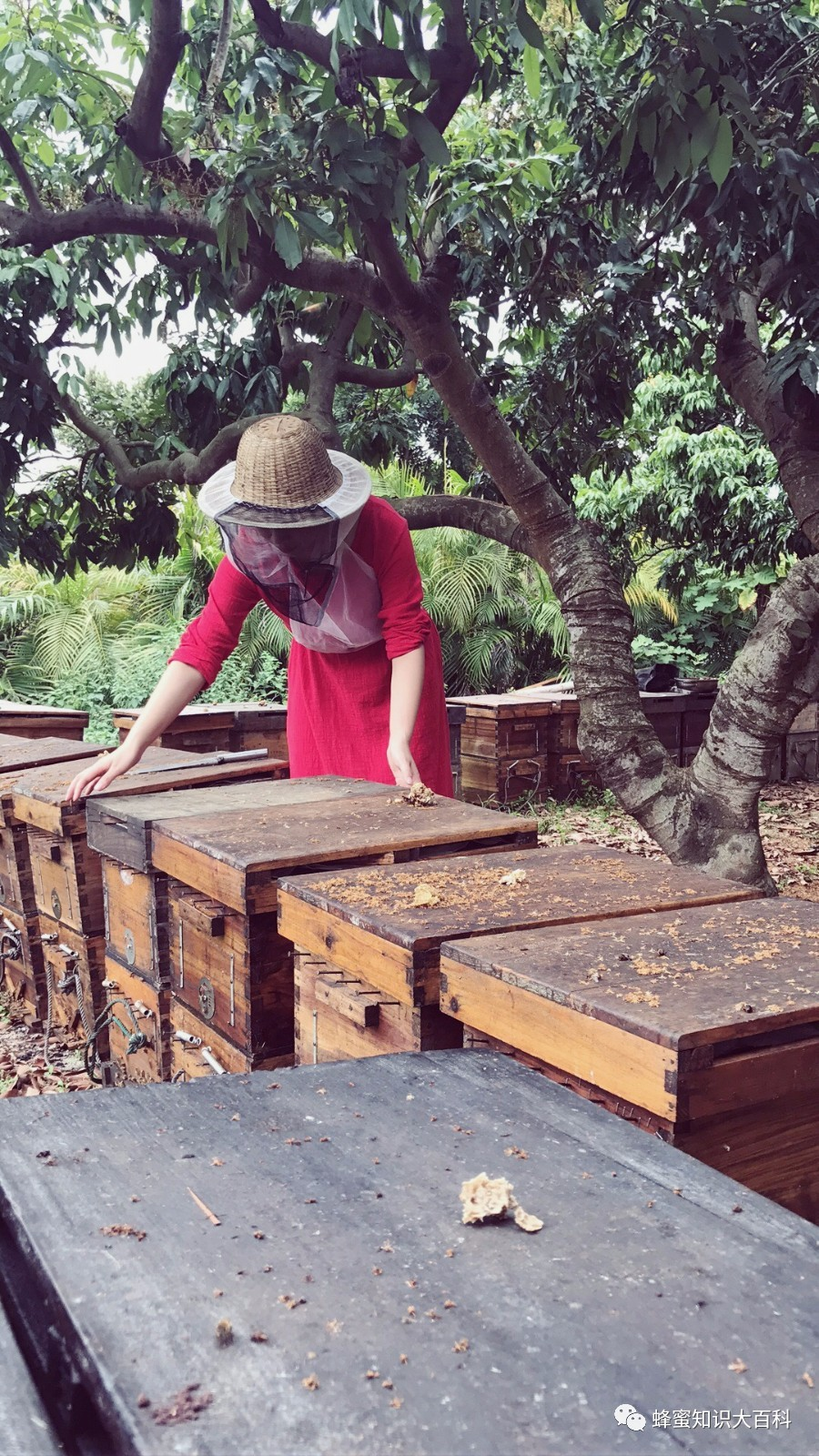 假蜂蜜块 我的蜂蜜歌曲播放 叶氏蜂蜜 适合男人的蜂蜜 野生蜂蜜怎么