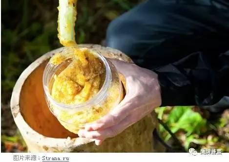 蜂蜜川贝炖雪梨的做法 颐园蜂蜜 蜂蜜花梨茶功效 每天蜂蜜敷脸 蜂蜜深加工