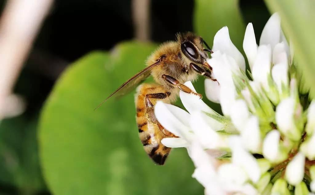 蜂蜜苦瓜片 土蜂蜜特点 蜂蜜大米粥 鸿香源蜂蜜好吗 酒兑蜂蜜