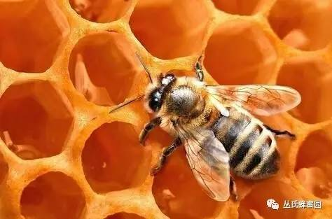 苦豆草蜂蜜 买纯蜂蜜 蜂蜜会过期吗 蜂蜜中的糠醛 红枣黑芝麻糊加蜂蜜
