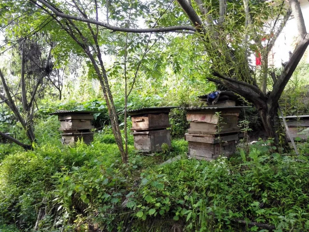 什么蜂蜜最有营养 蜂蜜结晶像猪油 豆角蜂蜜 什么时间喝蜂蜜好 醋和蜂蜜能减肥吗