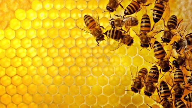 加上蜂蜜怎么做孝素 鼻咽癌蜂蜜 蜂蜜专卖 蜂蜜生姜水减肥法 江山牌蜂蜜
