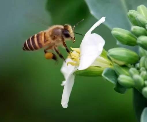 黑芝麻加蜂蜜 党参蜂蜜 煮茶叶粥放蜂蜜好吗 伊纯蜂蜜 茶能和蜂蜜一起喝吗