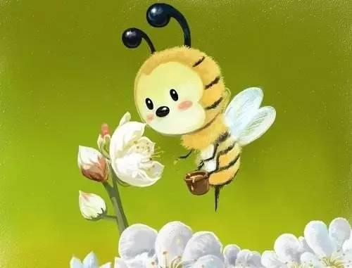 提神喝什么蜂蜜 苏州蜂蜜专卖店 澳洲蜂蜜怎么样 蜂蜜水上火吗 兔子喝蜂蜜水