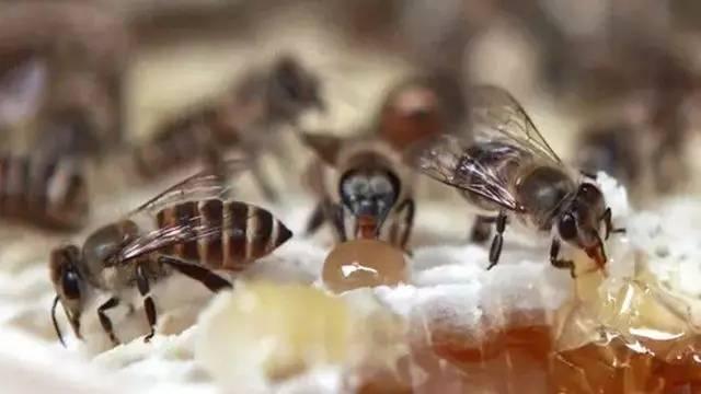 榴莲蜂蜜 礼当家 天然蜂蜜 哪种蜂蜜对胃好 结膜炎蜂蜜 白醋和蜂蜜