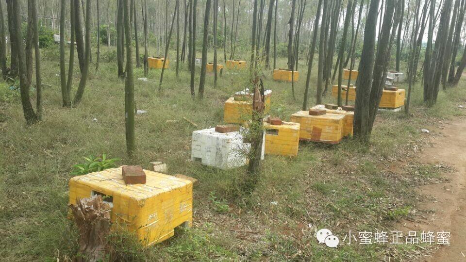 九蜂堂蜂蜜怎么样 女人喝蜂蜜水坏处 蜂蜜食醋 蜂蜜的波比 柠檬茉莉花蜂蜜
