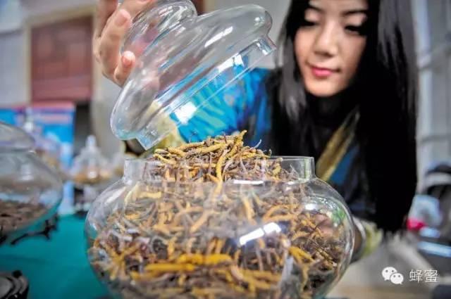 如何将一杯蜂蜜水喝出冬虫夏草的效果?
