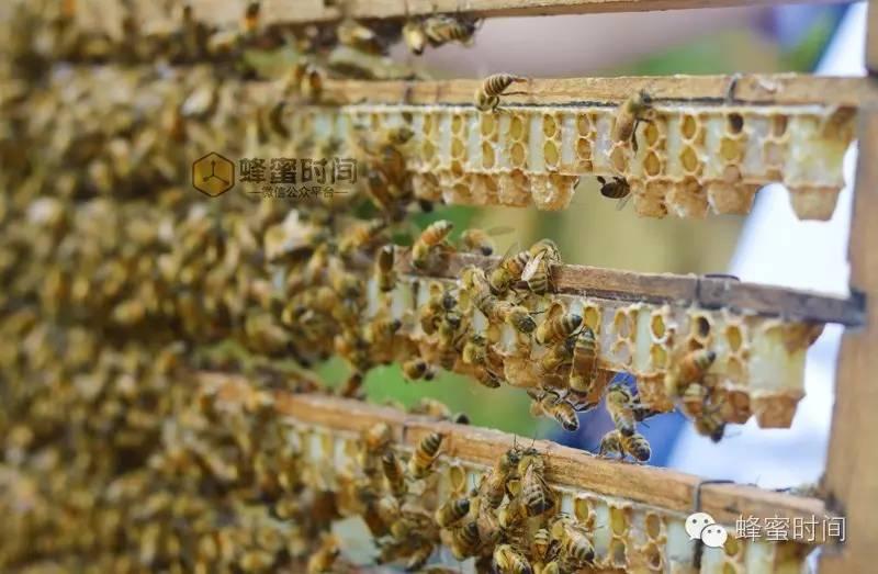 蜂蜜加醋喝 马努卡蜂蜜功效 茶水可以加蜂蜜吗 3岁孩子可以喝蜂蜜水吗 黑咖啡和蜂蜜