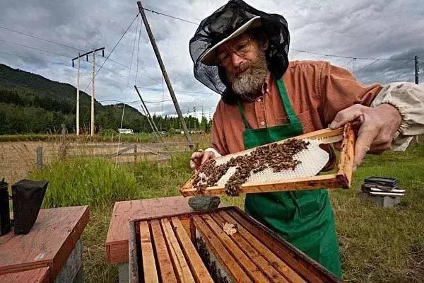 蜂蜜白醋一起能喝吗 益母草蜂蜜真假 颐园蜂蜜 云南蜂蜜图片 怎样腌制蜂蜜金桔