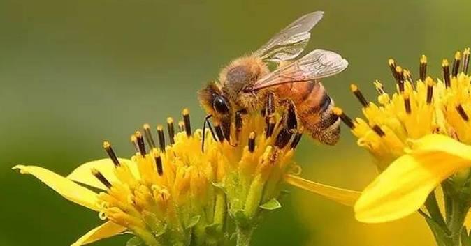 蜂蜜美容方法 生姜蜂蜜茶什么时候喝 儿童吃蜂蜜好不好 枣花蜂蜜性 山东蜂蜜