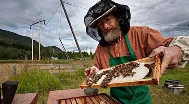 蜂蜜利尿 纯天然蜂蜜供应 咳嗽有痰能喝蜂蜜水吗 哪的蜂蜜最好 蜂蜜治疗咽炎