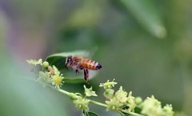 蜂蜜养殖技术 西天目蜂蜜农家 西红柿和蜂蜜 淘宝哪家蜂蜜是真的 蜂蜜能让嘴唇变红吗