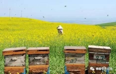 怎么分辨蜂蜜的好坏 冯氏蜂语堂槐花蜂蜜1000g 蜜泉牌革木蜂蜜 蜂蜜会酸吗 婴儿吃蜂蜜有什么影响