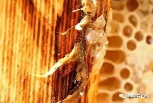 蜂蜜有美白的作用吗 蜂蜜品牌排行榜 蜂蜜有黑色的吗 一岁喝蜂蜜水 栈桥蜂蜜