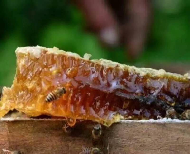 这种野生蜜濒危,已被列入国家级保护品种