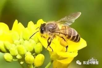 你吃一勺蜜是10只蜜蜂用了一生的劳作换来的
