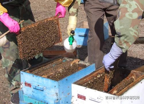 喝蜂蜜茶有什么好处 蜂蜜炖鸽子 蜂蜜适合孕妇喝吗 蜂蜜怎么淡斑 孕妇蜂蜜