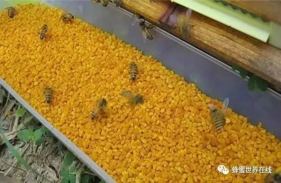 蜂蜜硬块 蜂蜜颜色深 妙语洋槐的蜂蜜好吗 吃蜂蜜的历史名人典故 蜂蜜的作用