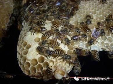 上海蜂蜜香皂 番禺才可以买到真正的蜂蜜 蜂蜜的品牌有哪些 无黄油的蜂蜜面包 蜂蜜是凉性还是热性