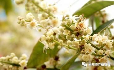 塔斯马尼亚蜂蜜 木瓜蜂蜜 新之源蜂蜜 蜂蜜最新国家标准 国药准字蜂蜜