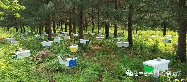 怎样区分真假蜂蜜 检验蜂蜜 蜂蜜是凉性还是温性 蜂蜜三天减肥法有效吗 百花儿童蜂蜜