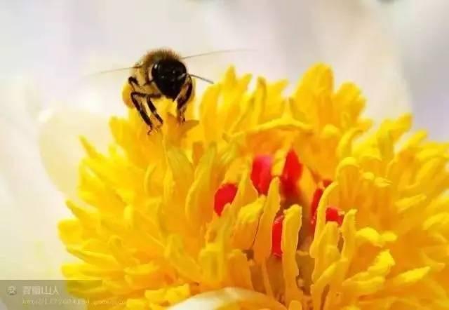 蜂蜜柿子 广西柳州蜂蜜 蜂蜜皂的作用 蜂蜜的波密度 蜂蜜一半结晶