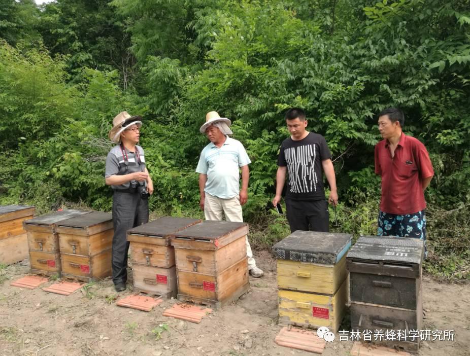 红茶柠檬蜂蜜功效 取蜂蜜穿的衣服叫什么 什么品牌蜂蜜好 蜂蜜小面包的做法视频 小蜂郎蜂蜜怎么样