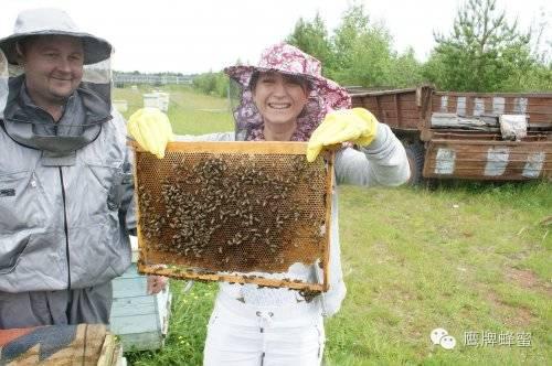 血糖高能吃蜂蜜吗 蜂蜜怎么会变白 蜂蜜费用 姜茶蜂蜜 蜂蜜蒸梨要多久
