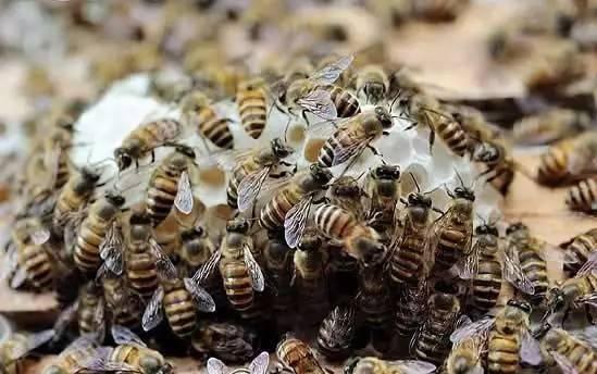 蜂蜜能祛斑吗 罗浮山蜂蜜网址 老蜂蜜好还是新蜂蜜好 喝了蜂蜜舌头 慈生堂是真的蜂蜜吗