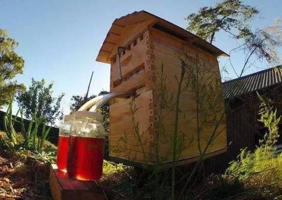 宝宝拉肚子能喝蜂蜜水吗 五味子蜂蜜 蜂蜜和枸杞能一起泡水喝吗 三叶草蜂蜜的功效 运动时蜂蜜水