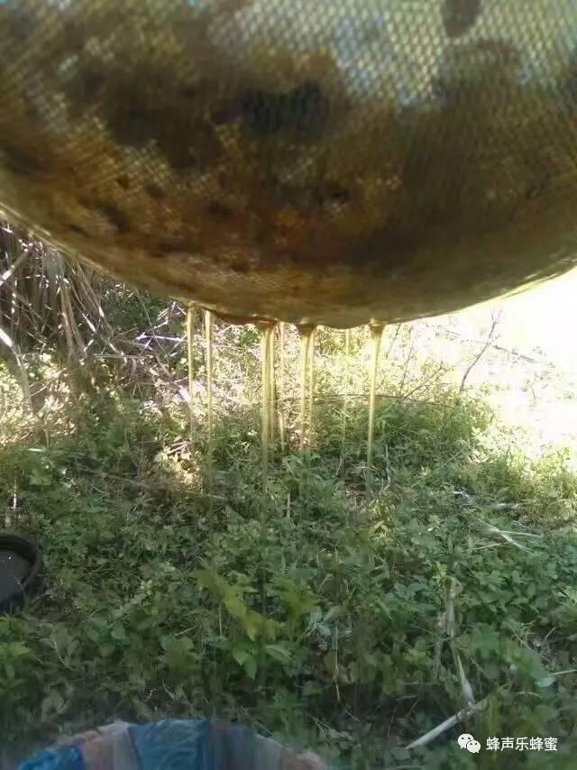 早晨喝蜂蜜水的好处 泡青梅酒加蜂蜜 每天喝红枣蜂蜜水 蜂蜜煮熟 手术后蜂蜜