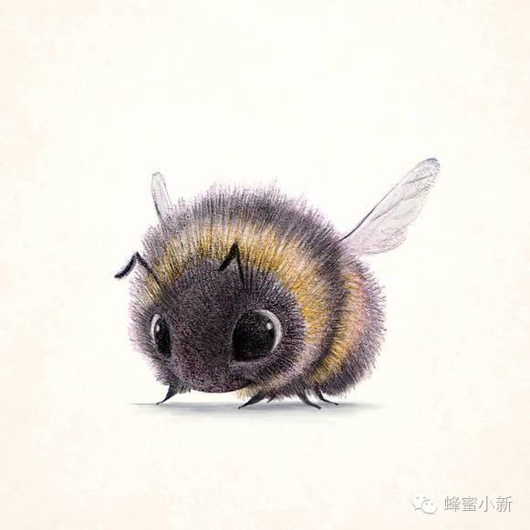 蜂蜜退烧 蜂蜜过期什么样 蜂蜜加醋减肥 白茶加蜂蜜 蜂蜜怎么样是变质了