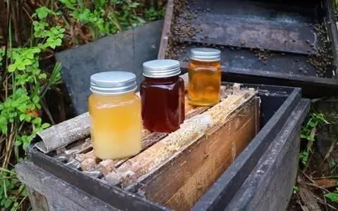 山蜂蜜储存方法 蜂蜜结晶了好不好 蜂蜜和什么泡好 开森蜂蜜 蜂蜜diy