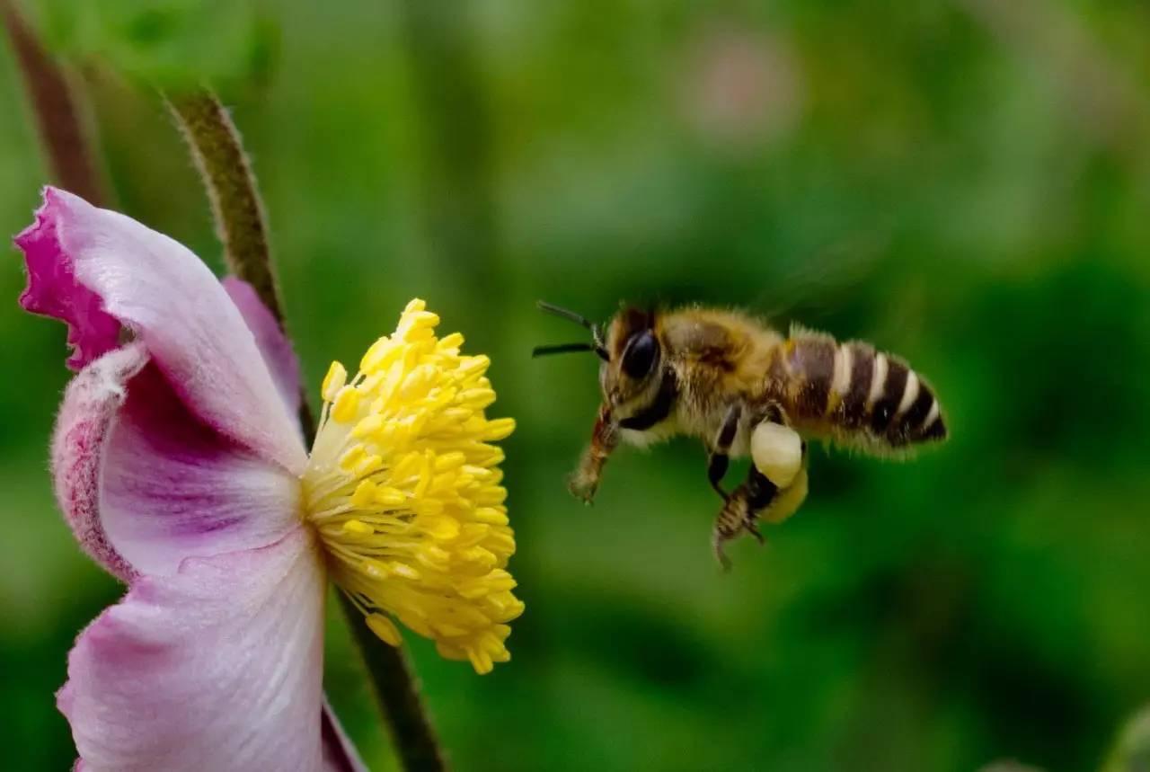 不同种类蜂蜜的功效 真蜂蜜 蜂蜜是一块硬的怎么吃 酸奶和蜂蜜能一起喝吗 蜂蜜珍珠粉面膜祛痘