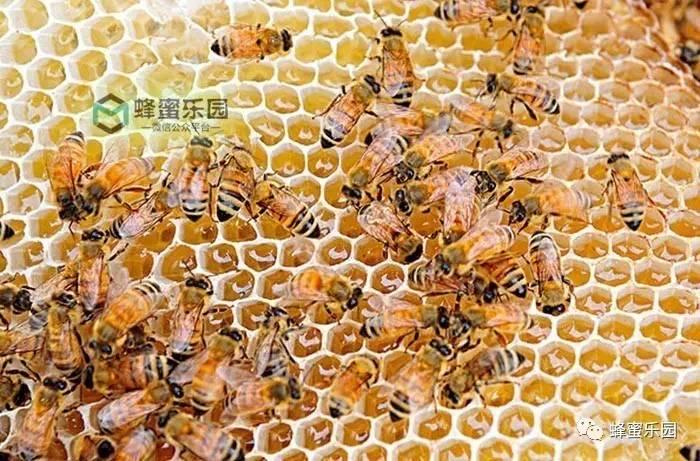蜂蜜面膜可以祛痘印吗 土蜂蜜辨别 蜂蜜有白色的么 吃蜂蜜和 天然蜂蜜多少钱一斤