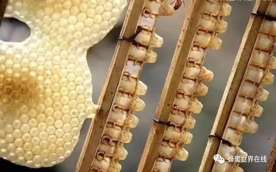 如何网上卖蜂蜜 汪氏蜂蜜官网 莲子心蜂蜜 蜂蜜脆皮小馒头 白茯苓和蜂蜜起吃吗