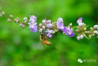 纯蜂蜜、纯天然植物蜜源蜂蜜;买蜂蜜前先弄清楚再买不迟!!!