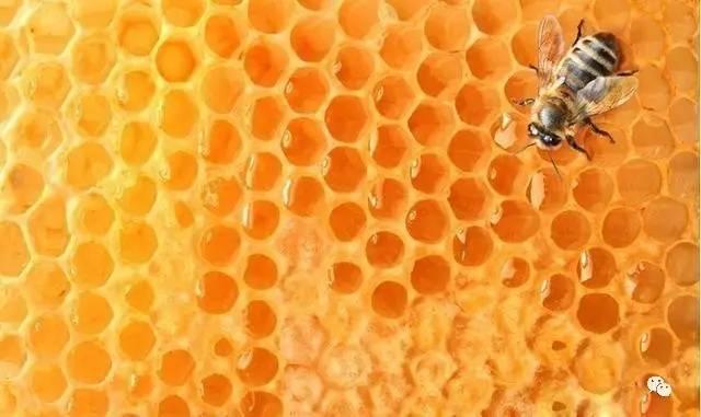 蜂蜜没有蛋白质 绿茶 蜂蜜 核桃桂圆蜂蜜 扁桃体化脓蜂蜜 蜂蜜鸡蛋水治疗咳嗽