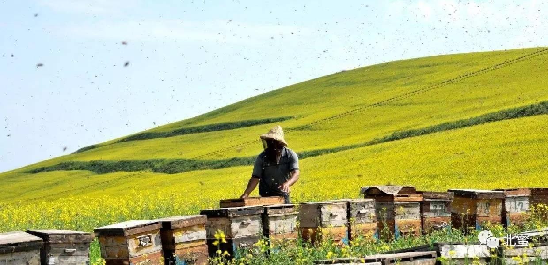 蜂蜜生姜汁 一岁以下的宝宝能喝蜂蜜吗 无水蜂蜜 颐寿园蜂蜜官网 热蜂蜜柠檬水
