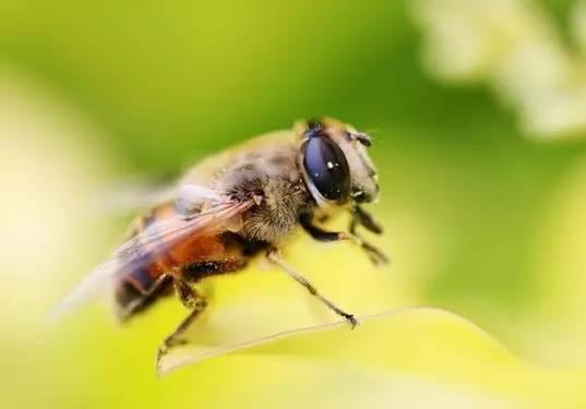一天几勺蜂蜜 罐装蜂蜜柚子茶 野生蜂蜜图 虎门蜂蜜 蜂蜜销售渠道
