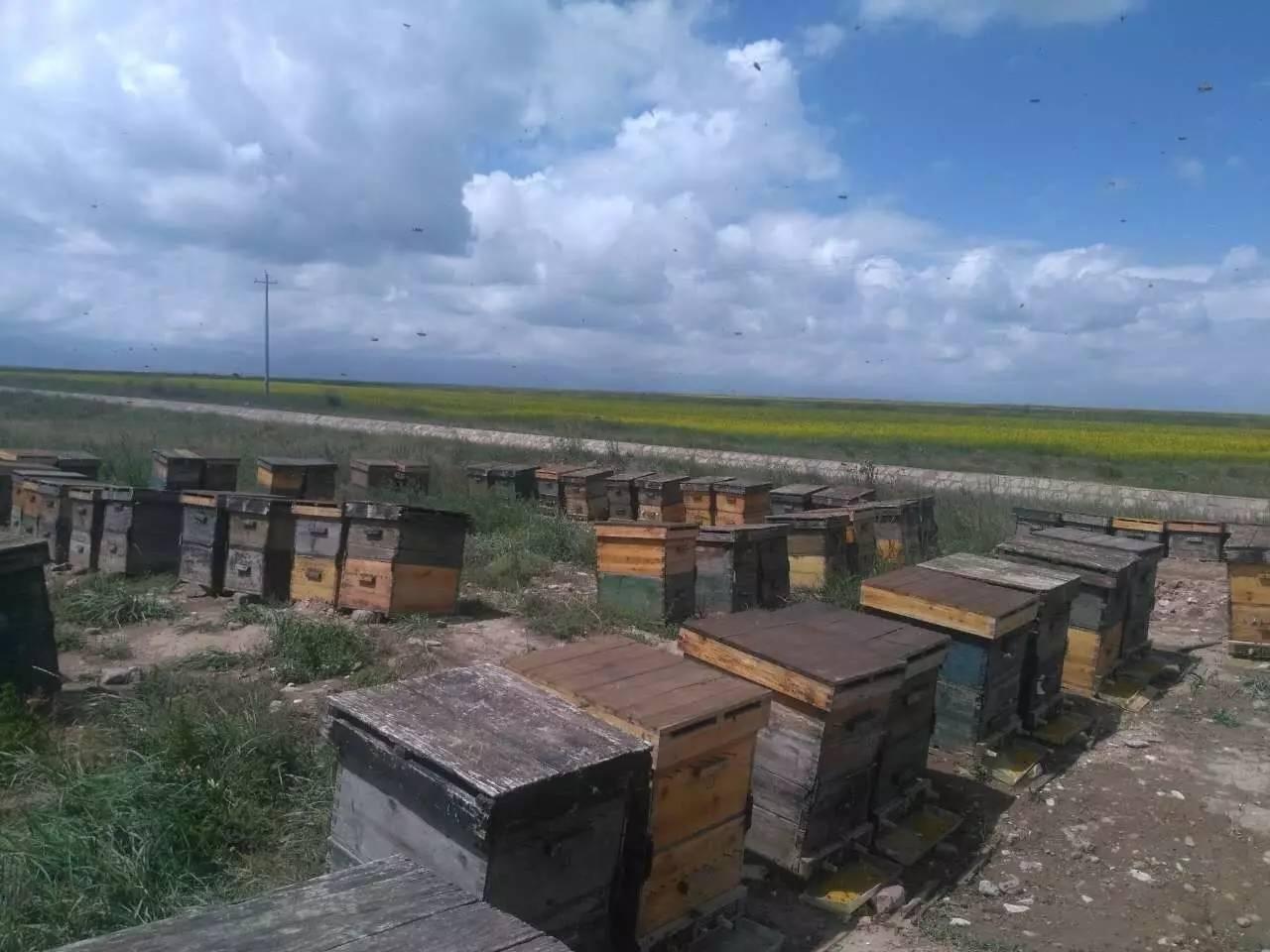 买蜂蜜去哪 能从香港带蜂蜜 蜂蜜鸡蛋饼 面粉蜂蜜面膜 假岩蜂蜜